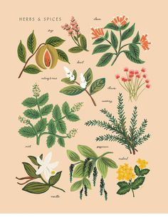 Herbs & Spices Print by Anna Bond of Rifle Paper Co.