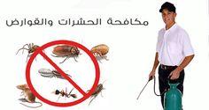 شركة مكافحة الحشرات بينبع 0542742095