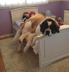 20 dogs who settled in the bed of the owner