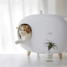 Cat Litter Cabinet, Cat Litter Tray, Hooded Litter Box, Best Litter Box, Cleaning Litter Box, Litter Box Covers, Cat Toilet, Thing 1, Cat Supplies