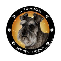 Schnauzer Uncropped My Best Friend Dog Breed Magnet