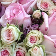 Fresh Roses + Girly Pink + Cabbage Green Roses With Magenta Centers