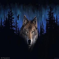 The international wolf center advances the survival of wolf populations by teaching about wolves, their relationship to wildlands and the human role in their.
