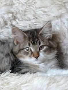 I am kind of in a cat mood so you will be getting cats for a while.