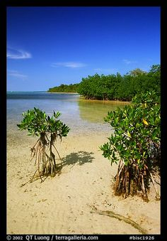 Mangrove shoreline on Elliott Key near the harbor, afternoon. Biscayne National Park (color) American National Parks, National Parks Usa, Florida Sunshine, Sunshine State, Biscayne National Park, Marine Ecosystem, Mangrove Forest, Picture Photo, State Parks