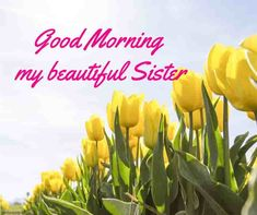 Looking for Good Morning Wishes for Sister? Start your day by sending these beautiful Images, Pictures, Quotes, Messages and Greetings to your Sis with Love. Good Morning Prayer, Good Morning Coffee, Good Morning Gif, Good Morning Picture, Good Morning Messages, Morning Prayers, Good Morning Wishes, Good Morning Quotes, Prayers For Sister