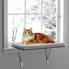 Cat Care Indoors The Deluxe Window Cat Perch from Pawslife provides a comfortable and large surface for your cat to rest while enjoying the view or laying in the sun. Keeps cat off your precious furniture. Secures easily to your windowsill. Cat Window Perch, Window Sill, Cat Window Shelf, Window Ledge, Dog Cat Tattoo, Cat Shelves, Cat Room, Pet Furniture, Luxury Furniture