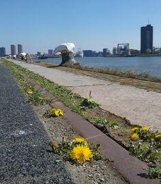 Maas Lloydkade foto: Heleen van Zantvoort Maas, Rotterdam, Country Roads, Pictures, Photos, Grimm
