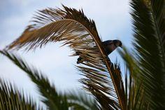 Crow sitting on a palm