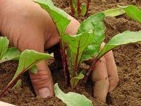 Zahradníkův kalendář na celý rok: kdy sít a sázet zeleninu, květiny, dřeviny?