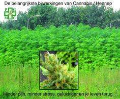 Interactie Cannabis en Medicijnen/Bijwerkingen | Medical Cannabis Supplies