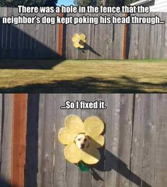 the-dog-in-the-fence funny animal pictures pictures funny Animals - Humor Memes Funny Animal Jokes, Really Funny Memes, Cute Funny Animals, Stupid Funny Memes, Funny Animal Pictures, Funny Relatable Memes, Funny Cute, Funny Dogs, Funny Drunk