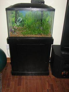 Fish tanks on pinterest aquarium amazing fish tanks and for Used 300 gallon fish tank for sale