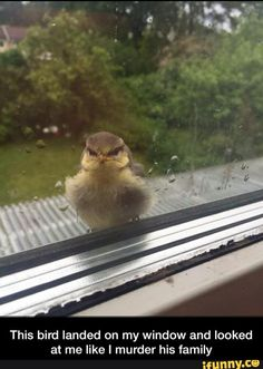 This bird landed on my window and looked at me like I murder his family