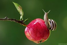 Insect Photography, Fruit Photography, Animal Photography, Travel Photography, Beautiful Creatures, Animals Beautiful, Cute Animals, Pet Snails, Anime Boy Sketch