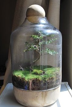 amazing bonsai terrarium ~ how does one do this? someone please teach me!                                                                                                                                                     More