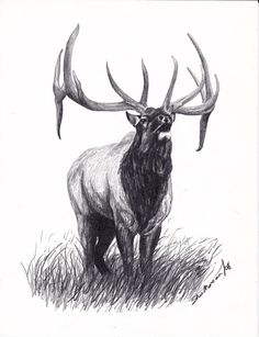 Items similar to Elk, Bull Elk Limited Edition Print, Black & White Drawing, Signed and Numbered by Canadian Artist Sheri Marean on Etsy Deer Skull Tattoos, Hunting Tattoos, Animal Tattoos, Elk Images, Elk Pictures, Drawing Pictures, Drawing Ideas, Elk Drawing, Bike Tattoos