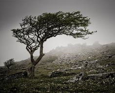 Landscape Photography 006 - Wind blown tree at Stowes Hill, Cornwall Landscape Photos, Landscape Photography, Nature Photography, Tree Tattoo Designs, Tattoo Ideas, Tree Artwork, Rocky Shore, Wuthering Heights, Windy Day