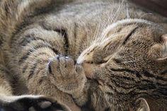 Kat, Slapen, Cute, Dierlijke, Huisdier