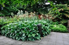 Hosta 'Krossa Regal' Garden Inspiration: Mien Ruys, Thinking Outside the Boxwood