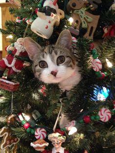 CHRISTMAS BEAUTY | CHRISTMAS | Pinterest | Beauty and Christmas