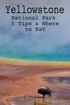 Yellowstone National Park Tips on Where to Eat - Alley's Recipe Book Yellowstone Vacation, Yellowstone Park, Wyoming Vacation, Tennessee Vacation, Yellowstone Winter, New Orleans, New York, Us National Parks, Grand Teton National Park