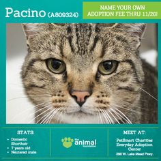 Say hello to our little friend Pacino (A809324)! This sweet, handsome fella loves pets and cuddles, and his ideal partner is just as affectionate as he is. Now through Wednesday, you can name your own adoption fee for Pacino, and all his dog and cat friends 1 year and older during our Adopt 'Til You Drop special! Meet him today at our PetSmart Charities Everyday Adoption Center.