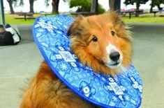 DIY Comfy Dog Cone | How to Make a Homemade Dog Cone ...