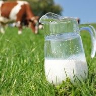 3 Surprising Things That Happen When You Stop Drinking Milk (Besides Improving Your Bones) Asthma, Stop Drinking, Drinking Milk, Vegan Life, Healthy Choices, Glass Of Milk, Improve Yourself, Medicinal Plants, Tips