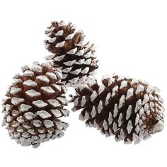 Large Frosted Pine Cones (7.91 BAM) ❤ liked on Polyvore featuring backgrounds, christmas and winter