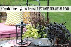 8 Tips to Keep Container Gardens Alive and Thriving by On the Banks of Squaw Creek