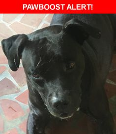 Is this your lost pet? Found in Stone Mountain, GA 30083. Please spread the word so we can find the owner!  black pit with white chest  Near Allgood Rd & E Durham Cir