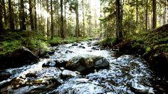 Relaxing Nature Music  Swedish Forests - Suoni della Natura