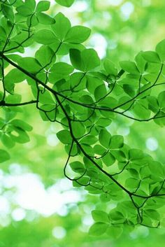 Beautiful Green Leaves. God's creation.