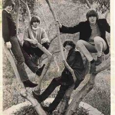 Byrds in a tree