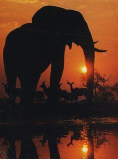 Serengeti National Park, Africa. | Pretty amazing!! #mothernature #elephant ❤️www.LHDC.com❤️