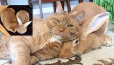 These two buddies not only share an inseparable bond, they look like twins! Meet Gus the ginger cat and Wallace…