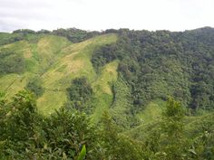 Nokrek National Park - In Meghalaya, India