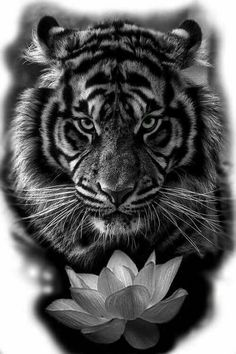 Geometric tiger tattoo design is part of Geometric Tiger Tattoo Designs For Men Next Luxury - Awesome Tiger with Lotus Flower Tattoos Tiger Head Tattoo, Head Tattoos, Lion Tattoo, Body Art Tattoos, Girl Tattoos, Sleeve Tattoos, White Tiger Tattoo, Tiger Tattoo Sleeve, Big Cat Tattoo