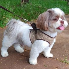 Love Dogs, Cute Dogs And Puppies, Little Puppies, Puppy Love, Pet Shop, Dog Grooming, Small Dogs, Cute Animals, Dog Stuff