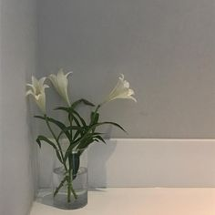 [☁︎] - 𝒉𝒐𝒏𝒆𝒚𝒚𝒎𝒊𝒍𝒌 The bloom is really a symbol of kindness and acceptance; Blooming Flowers, Pretty Flowers, White Flowers, Flower Aesthetic, White Aesthetic, Aesthetic Japan, Bloom Baby, Minimalist Architecture, Aesthetic Pictures