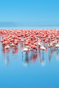 You'll see the flamingos at Lake Nakuru; keep an eye out too for the rare black rhino. #Jetsetter