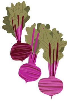 Sarah Watson Illustration: Beet it! Art And Illustration, Vegetable Illustration, Food Illustrations, Veggie Art, Watercolor Fruit, Botanical Wall Art, Oeuvre D'art, Clipart, Beets