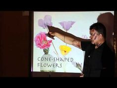 How to Draw Wildflowers I (video workshop) - John Muir Laws
