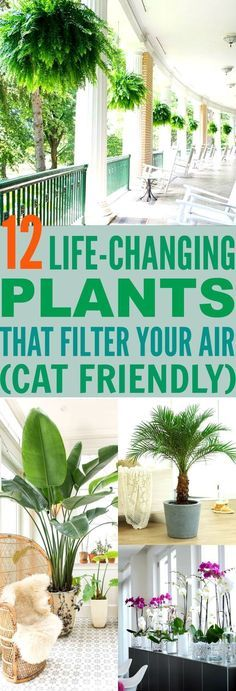 These 12 Air Filtering Plants Are Essential To Keep Your Air CLEAN! Not only are they gorgeous, they are also safe for your cats! : )
