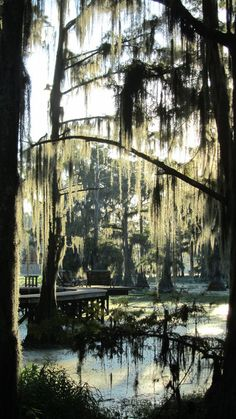Caddo Lake - Uncertain, Texas.  Love Texas towns named for concepts--Uncertain, Comfort, Utopia...
