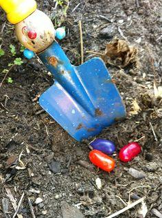 Grow Magic Jelly Beans!