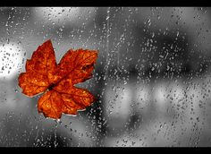 autumn leaf in the rain