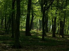 Dark deciduous forest - a place where young Elijah runs for his life, whilst being hunted by enemies.