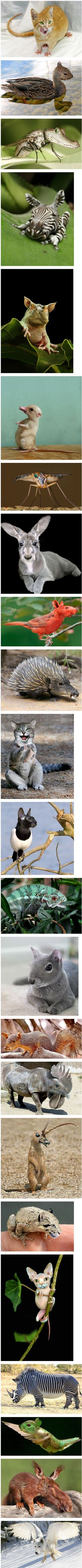 Photoshop Animals - Okay, this is so weird! Animals And Pets, Baby Animals, Funny Animals, Cute Animals, Animal Mashups, Animal Memes, Funny Animal Pictures, Funny Photos, Photoshopped Animals